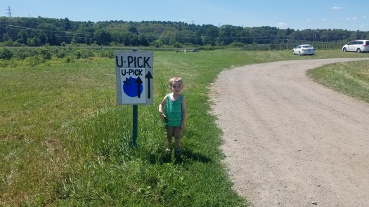 Review-of-Blueberry-Picking-at-Sunshine-Farm-Shelborn-MA
