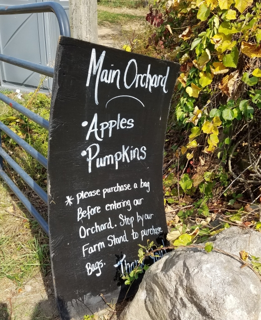 review-of-pumpkin-picking-at-boston-hill-farm-north-andover-ma